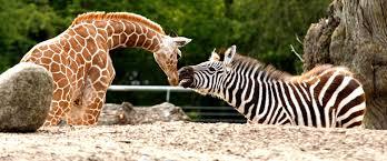 2528Familiedag i Zoo